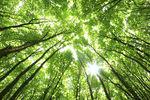 Le réseau des forêts